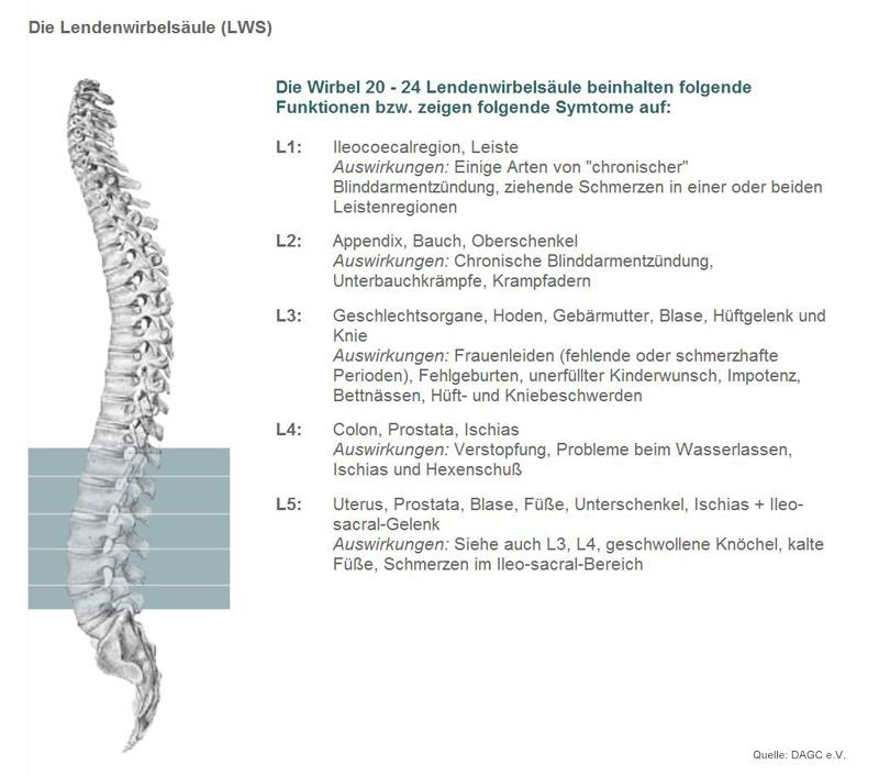 Berühmt L3 L4 Wirbel Zeitgenössisch - Menschliche Anatomie Bilder ...